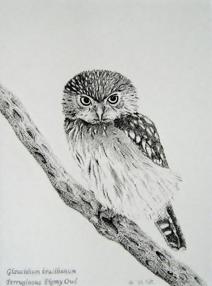 Maryann Kot Basic Drawing