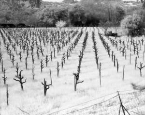 *Ron Rigge vineyard